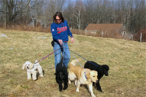 worcester walks dogs with multiple dogs on leash